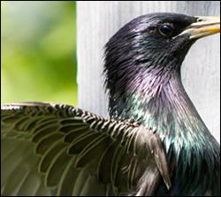 bird removal Richardson