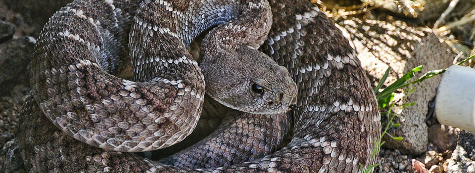 Friendswood snake control