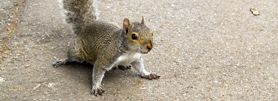 Friendswood squirrel control
